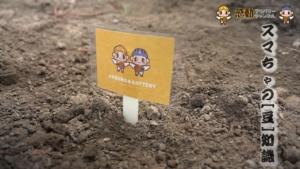 『感デリ』枝豆を植える